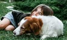 Skærm hund slikker Sommeren byder